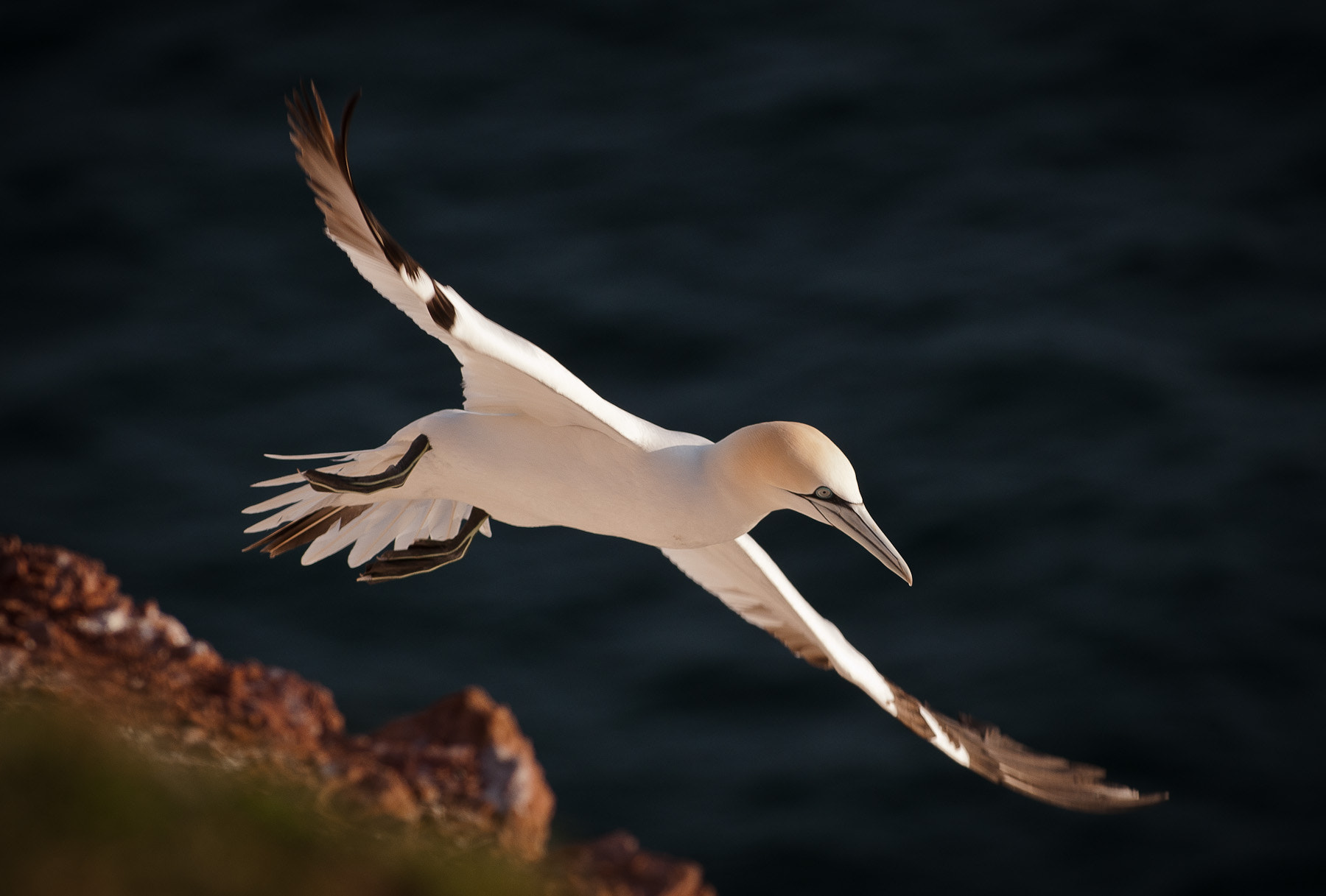 Photograph Flying  by Gorazd Golob on 500px