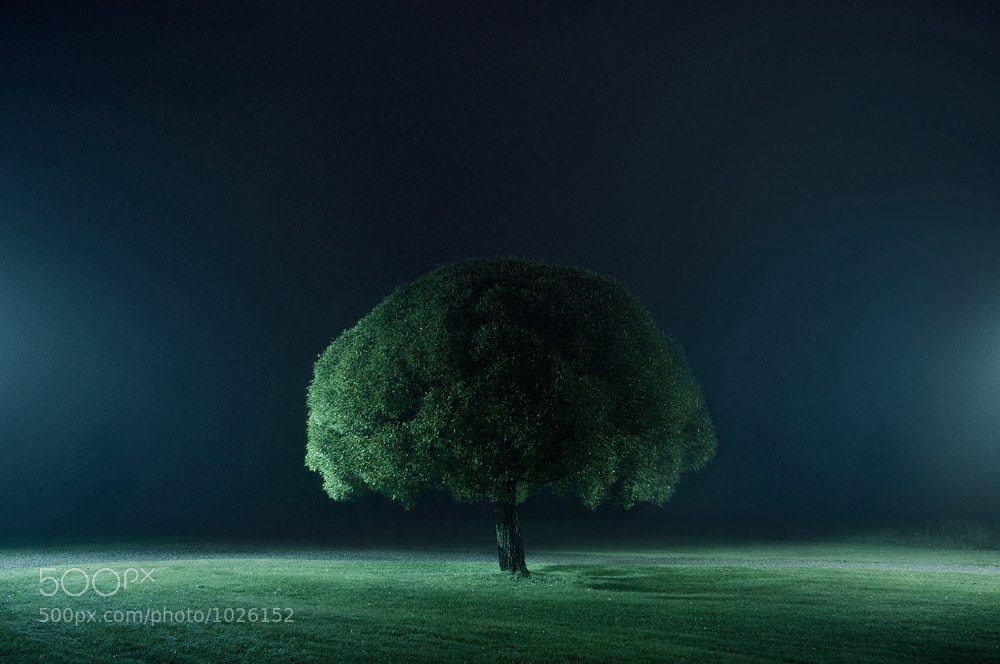 Photograph Tree of Life by Mikko Lagerstedt on 500px