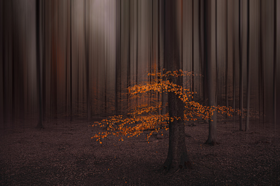 Light in the dark by Inge Schuster on 500px.com