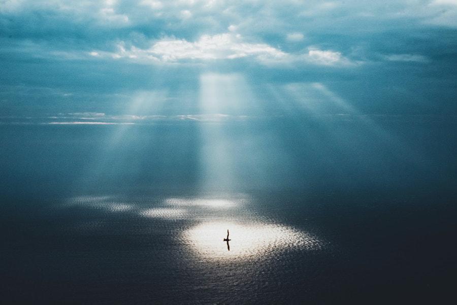 Into the light  by Adam Firman on 500px.com