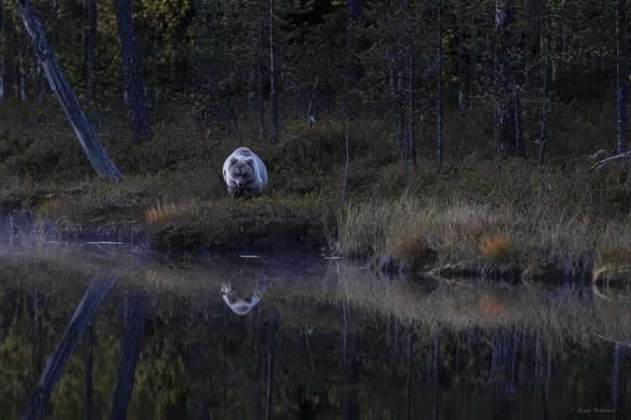 Silence wanderer by Seppo Rokkanen on 500px.com