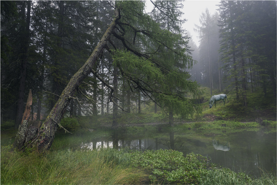[ misty lake ] by DEIWAT  on 500px.com