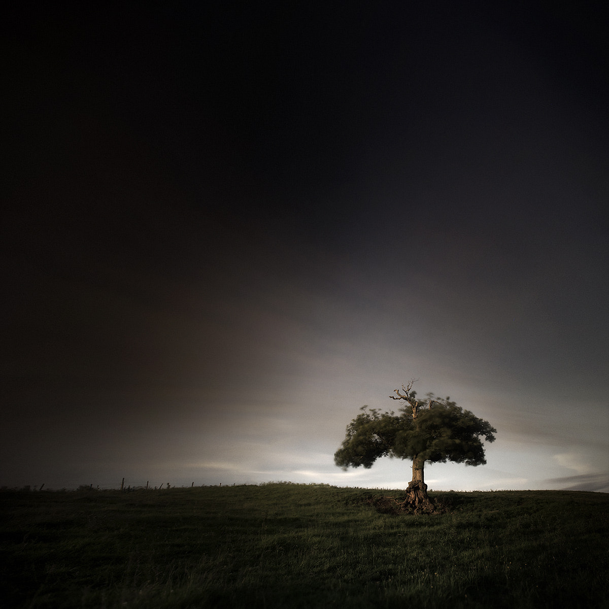 Photograph ѱ  Tree 1 IV by Andy Lee on 500px