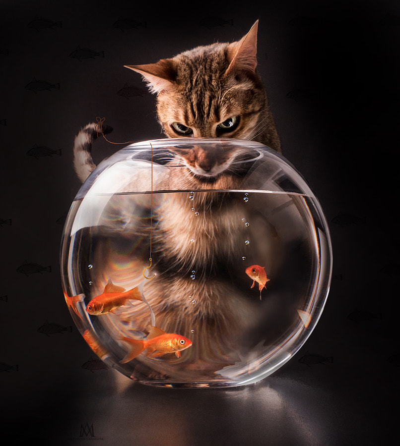 Photograph Cat fishing by Marianna Armata on 500px