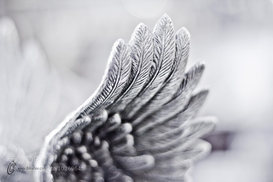 Photograph Wings by Fahad Siddiqui on 500px