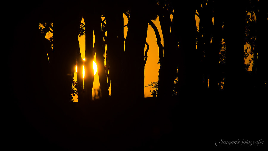 Photograph Trees in sunset by Jurgen Degrande on 500px