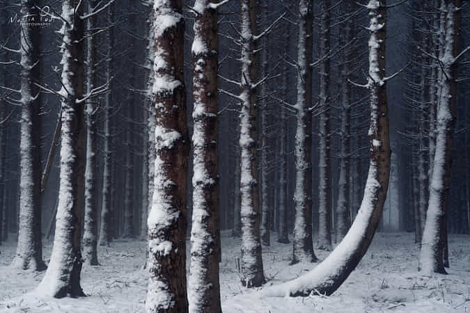 Crooked by Martin Podt