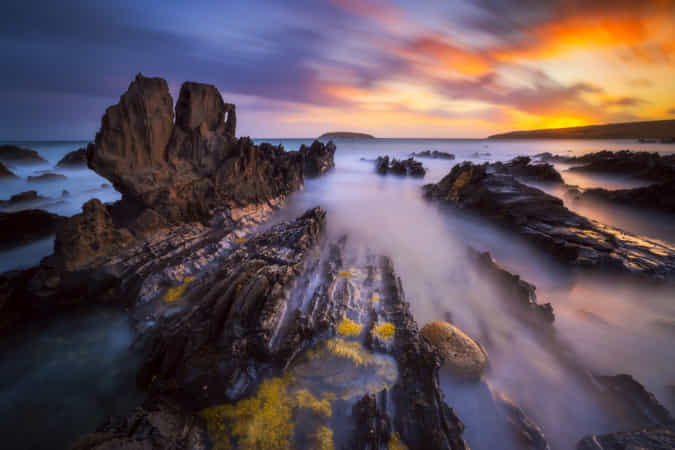 Petrel Dreams by Dylan Toh & Marianne Lim