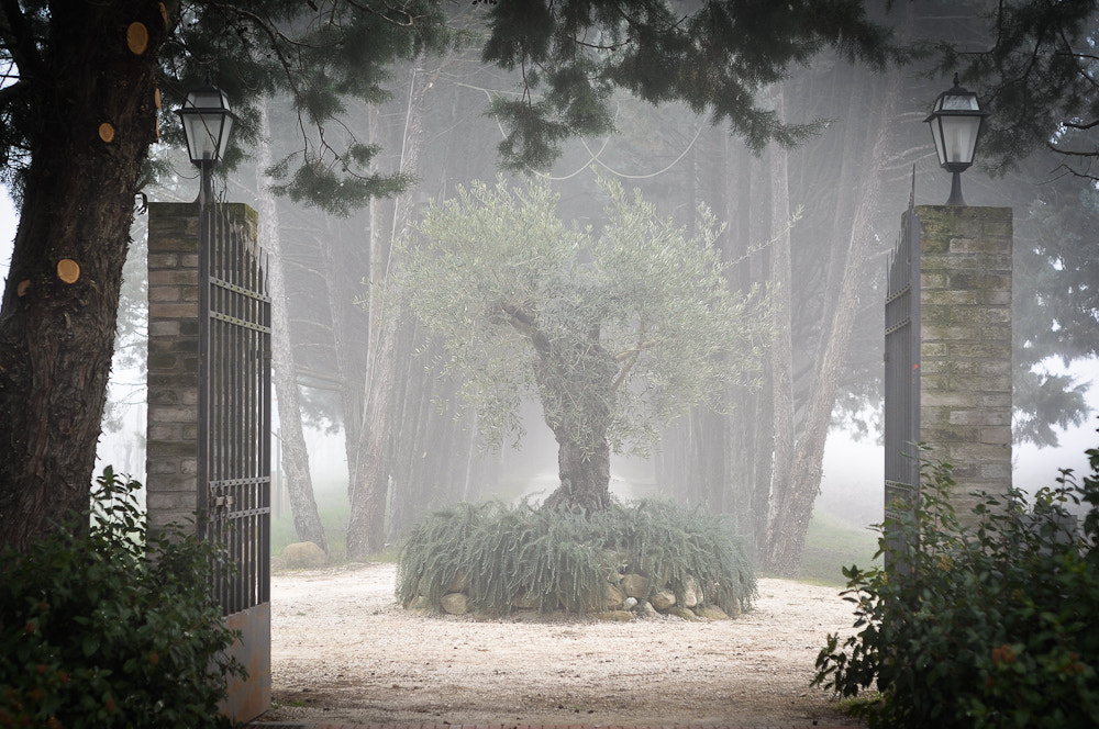Photograph Painted in mist by Simone Messaggi on 500px