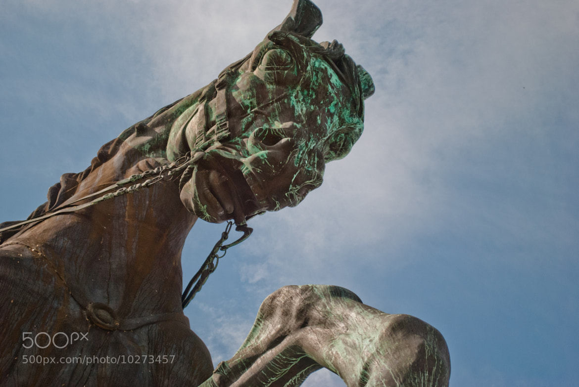 Photograph Horse Statue by Bob Ricca on 500px