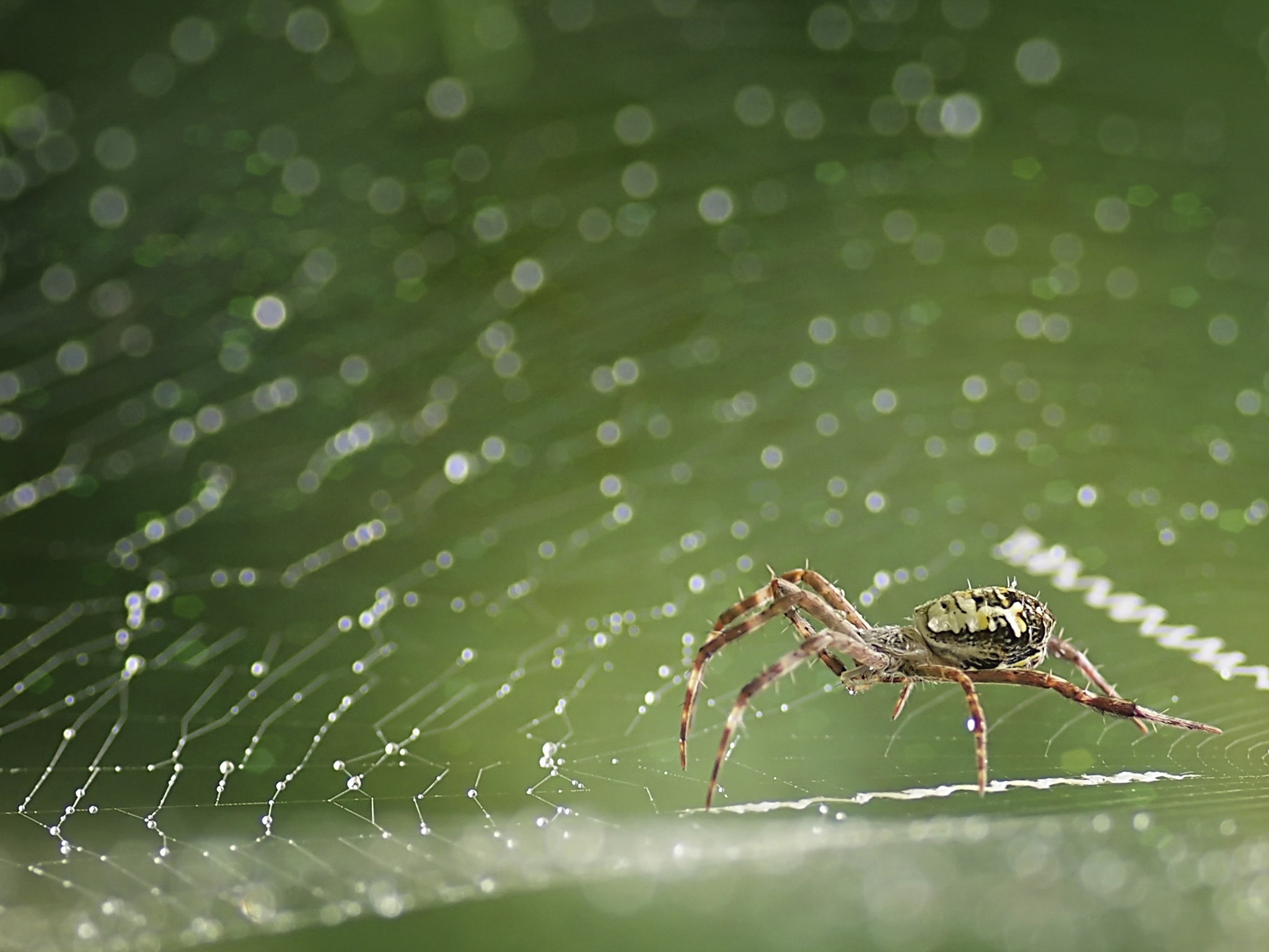 Photograph Spider and Bokeh by Bernard Budi Susanto on 500px