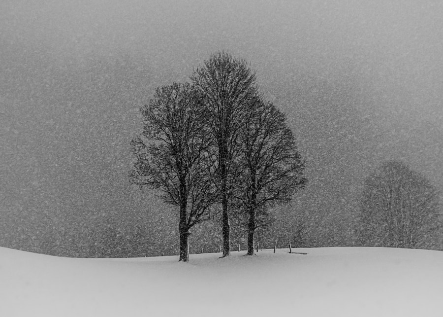 let it snow... by andy dauer on 500px.com