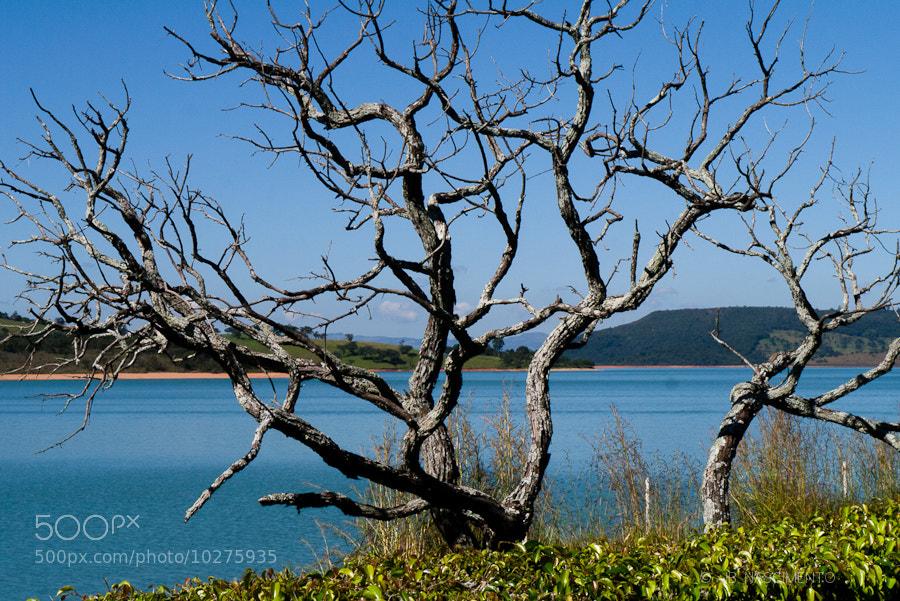 Photograph Galhos by JB Nascimento on 500px