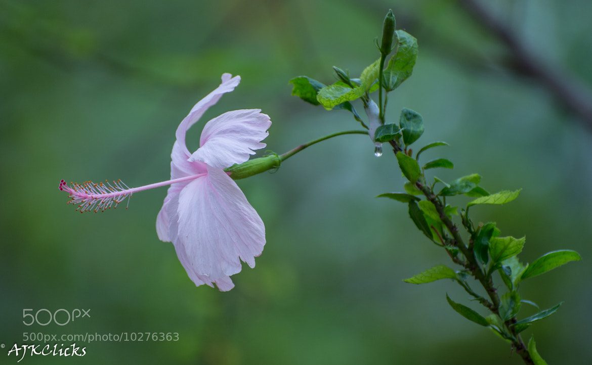 Photograph Fresh from the Garden by AJK Clicks on 500px