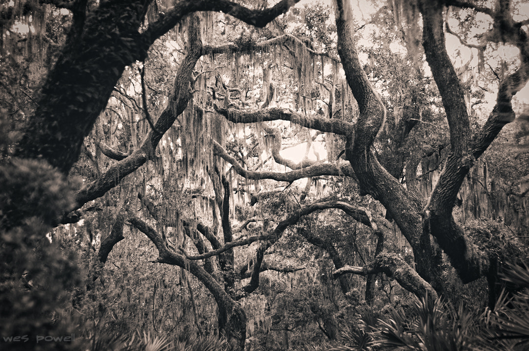 Photograph Cumberland Island by Wes Powell on 500px