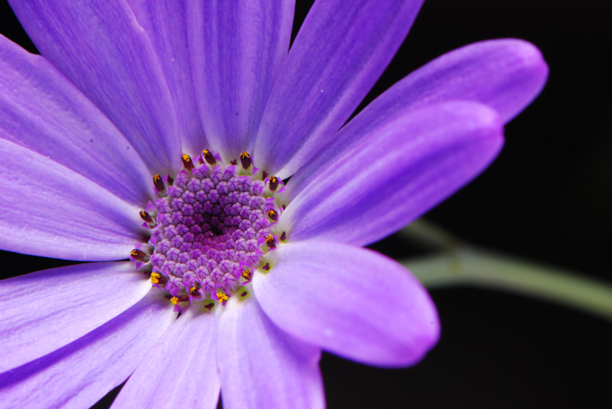 Photograph Small flower 2 by Norio Ohki on 500px