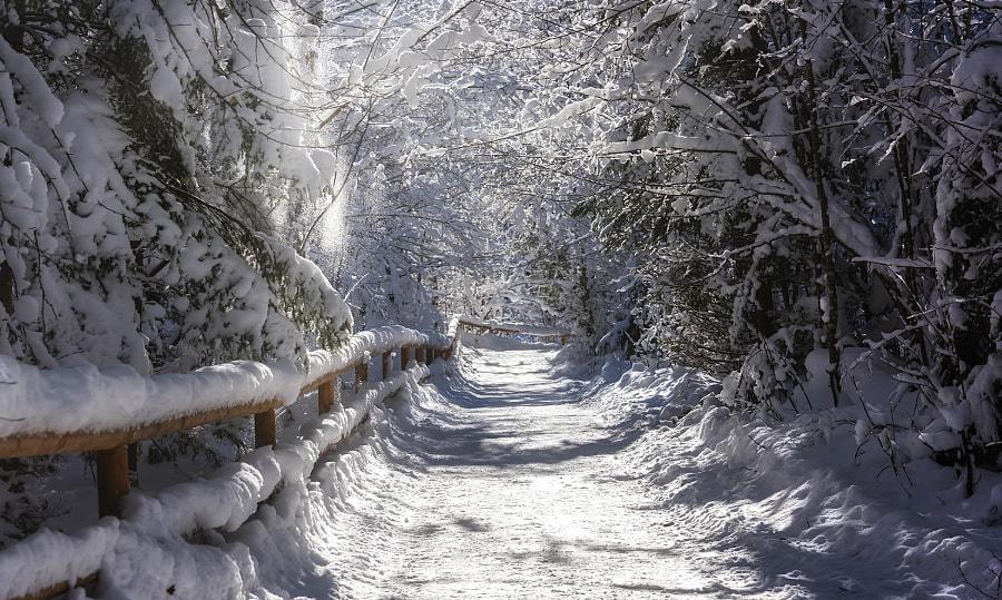 into the winterwonderland by Rudi Moerkl on 500px.com