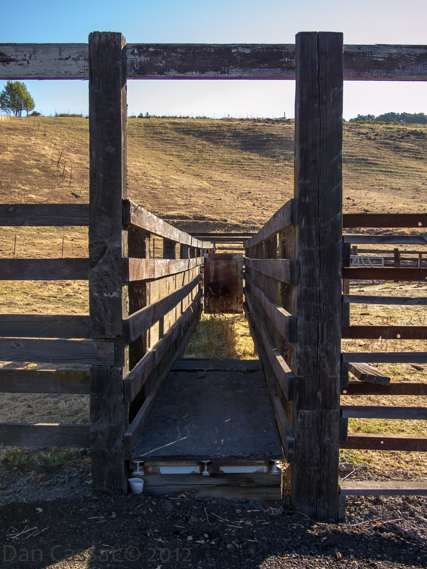 Photograph The Cattle Chute by Dan Cassat on 500px