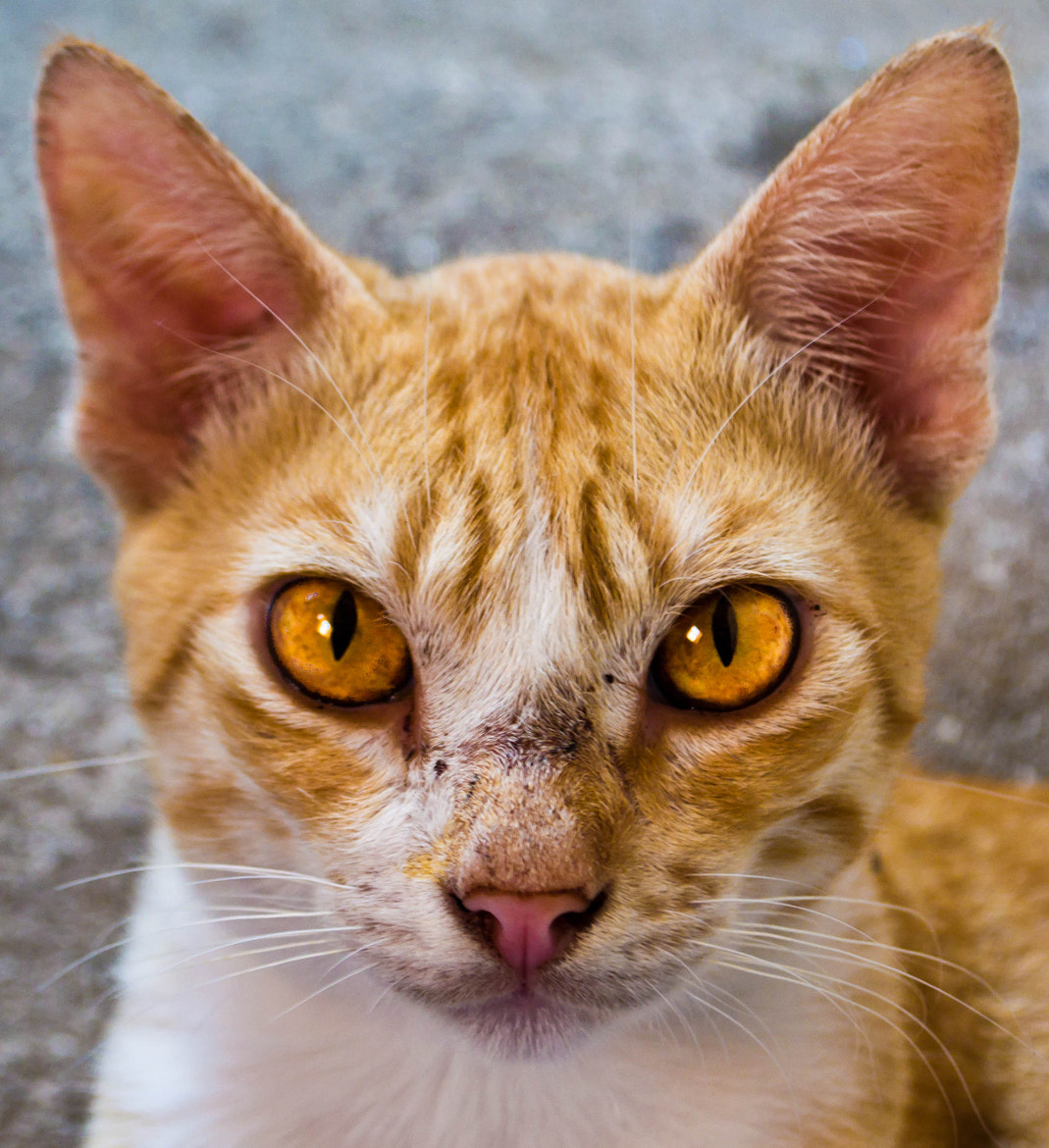 Photograph Olhar felino by Edson Lopes on 500px
