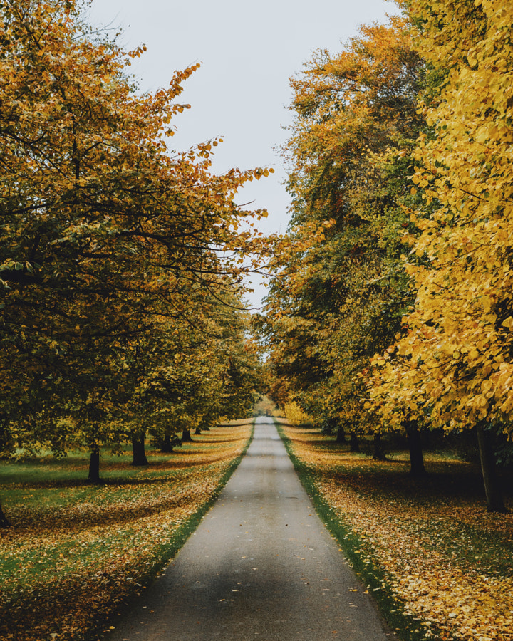 Autumn Road by Daniel Casson on 500px.com