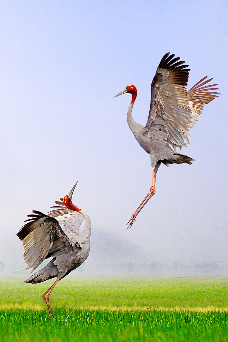 Photograph Red Crane by Le Quang Bao on 500px
