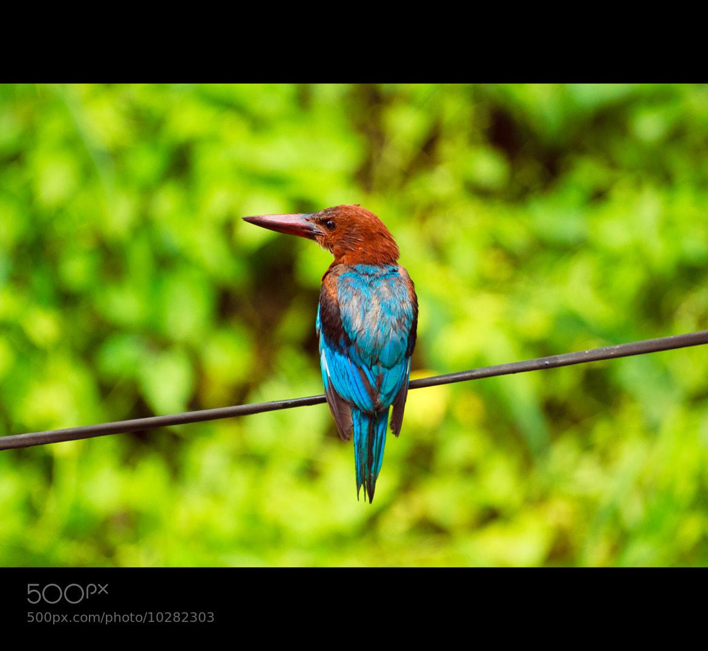 Photograph Untitled by Nidhin Raj on 500px