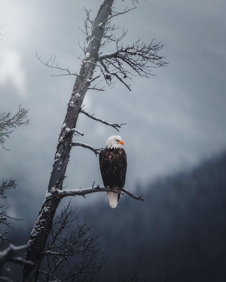 A Watchful Eye by Seth Macey on 500px.com