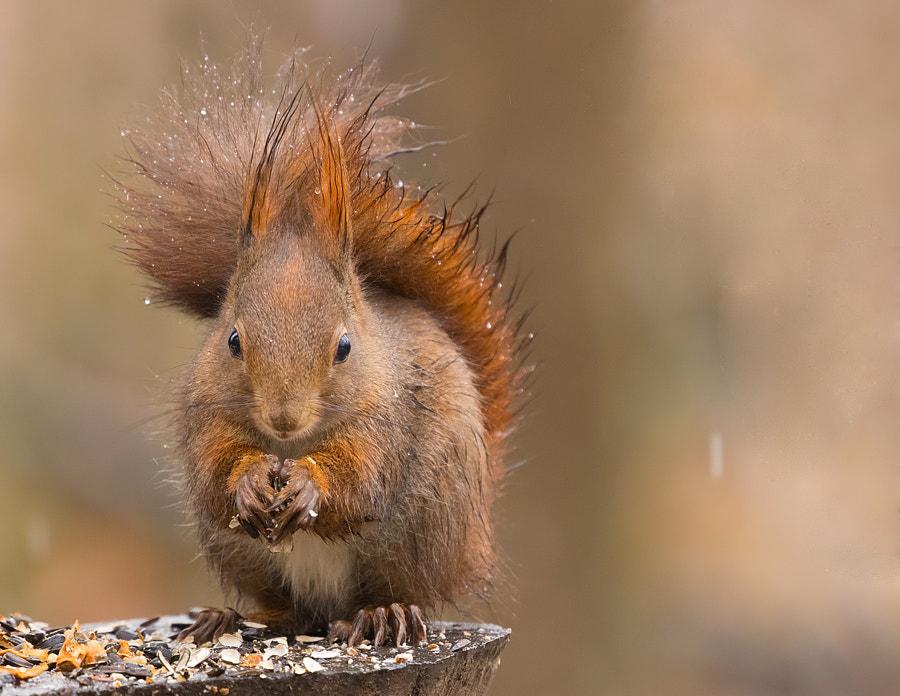 Squirrel by Robert Adamec on 500px.com