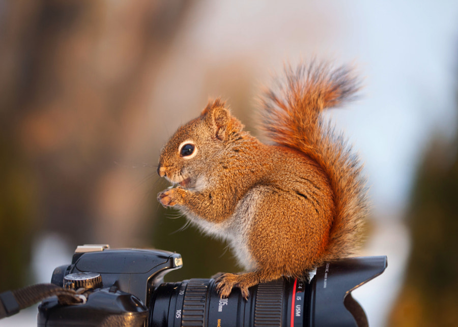 Between two shots by Andre Villeneuve on 500px.com
