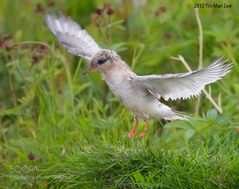 Photograph First Flight by Tin Man on 500px