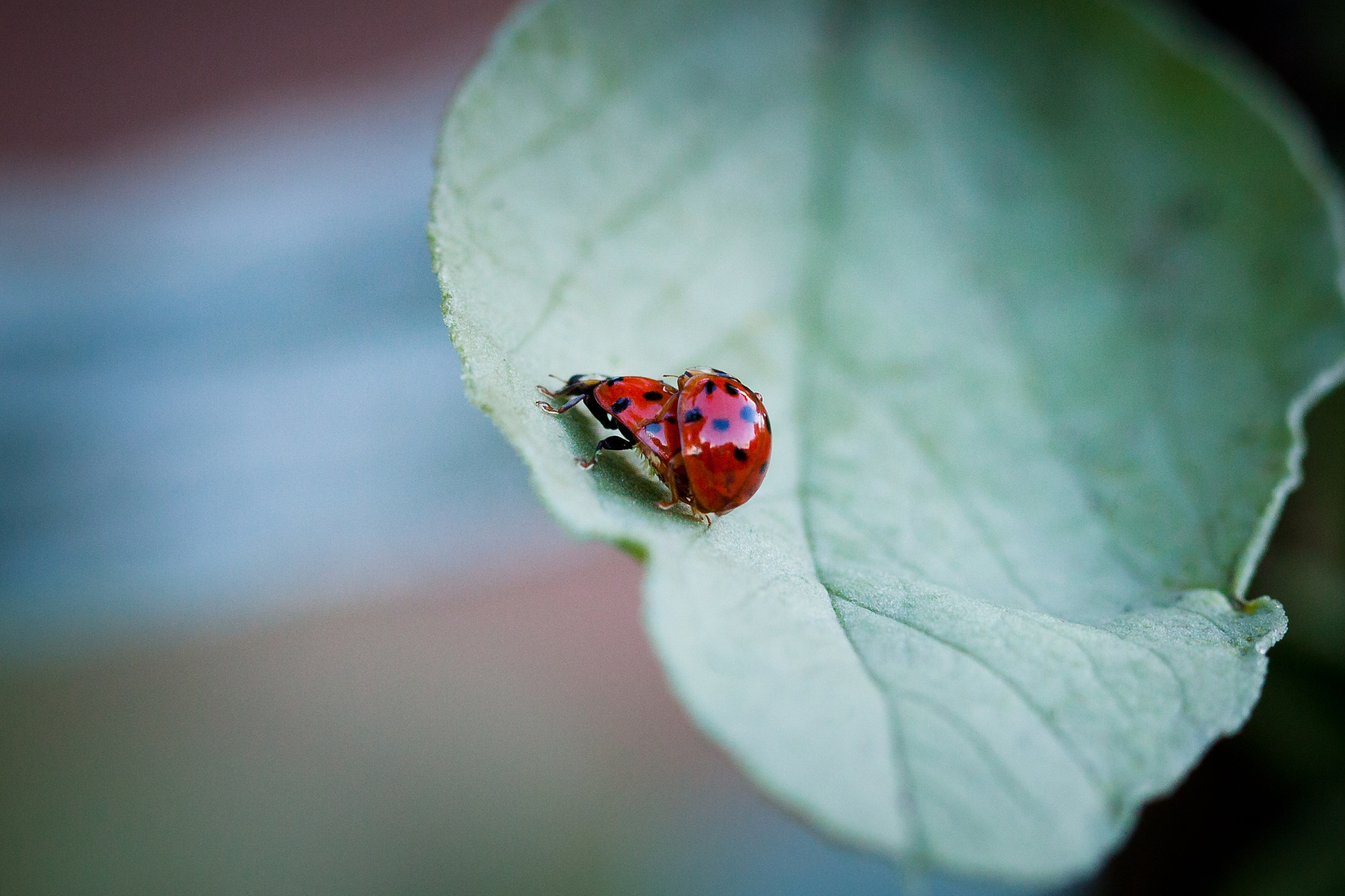 Photograph Ladybugs by Mark Prince on 500px