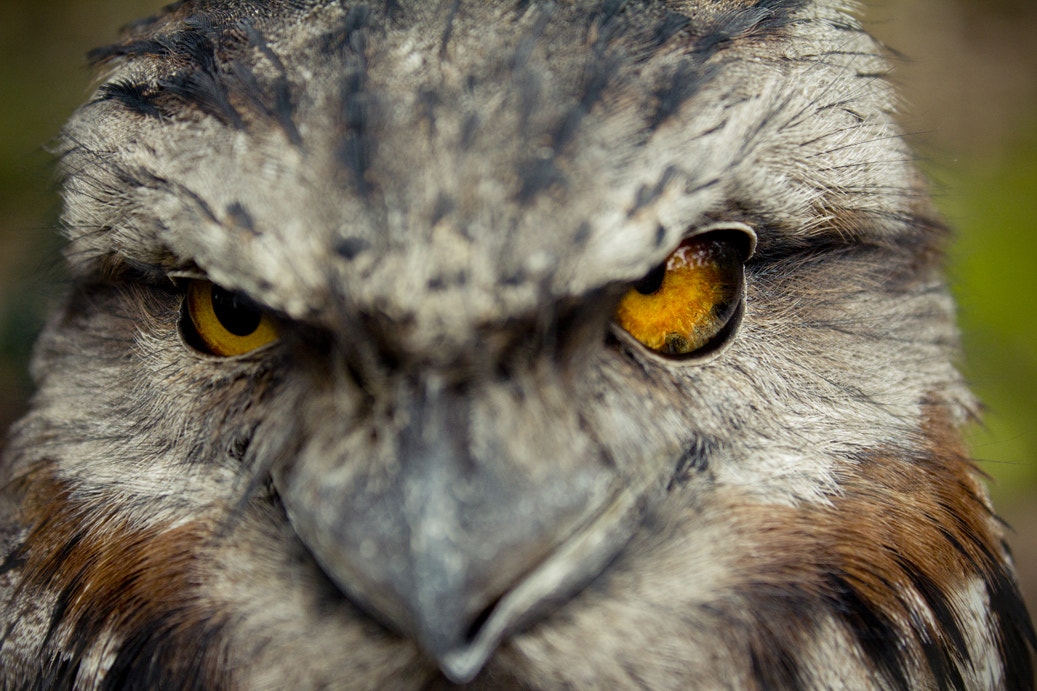 Photograph What are you looking at? by Ross Van der Watt on 500px