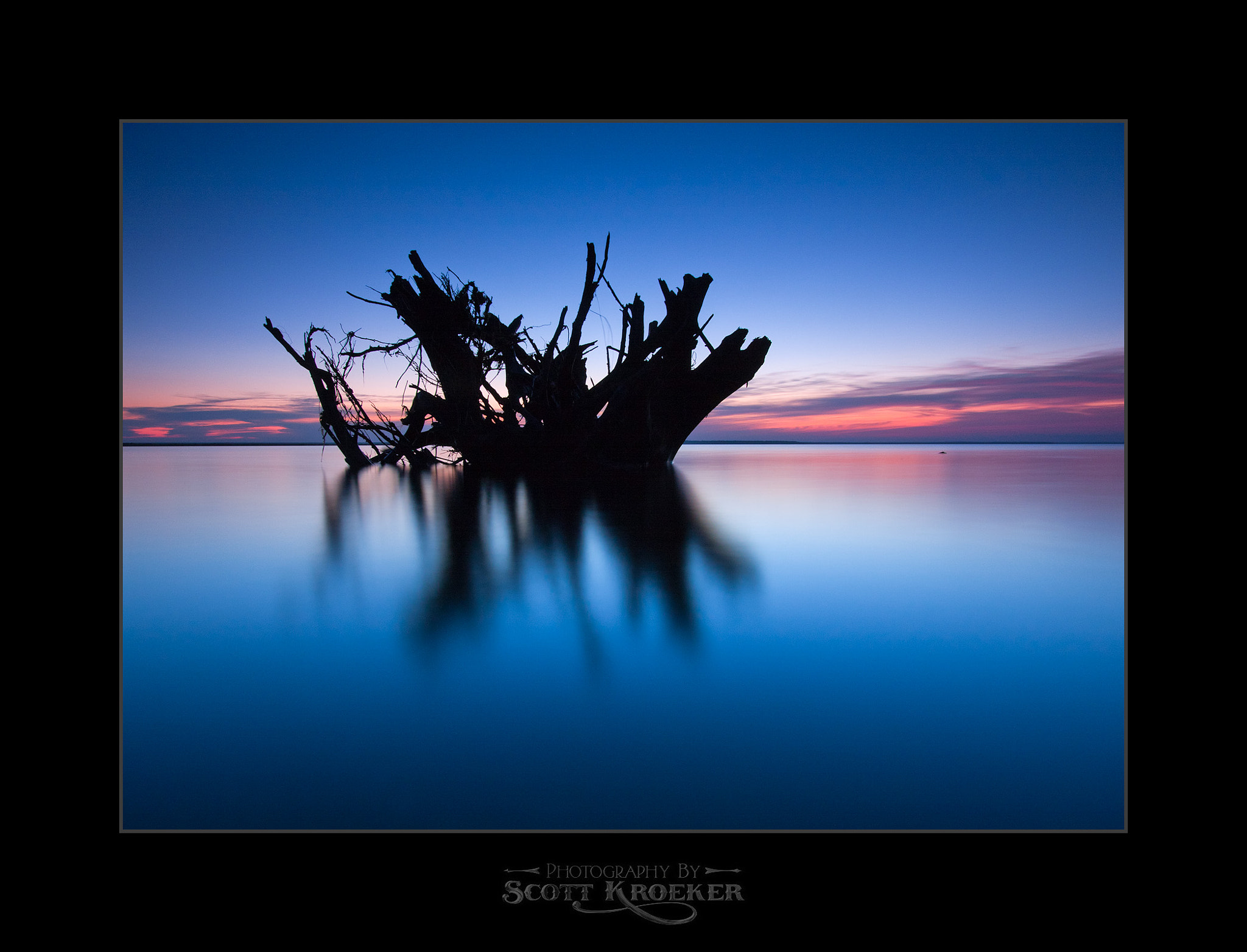 Photograph Up Rooted by Scott Kroeker on 500px