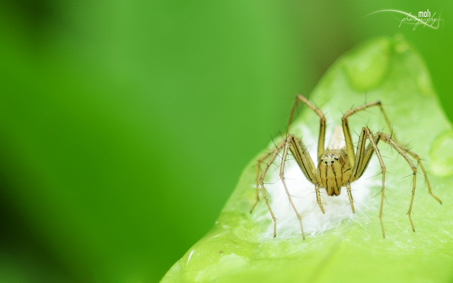 Photograph A Baby Spider by Mohan Duwal on 500px
