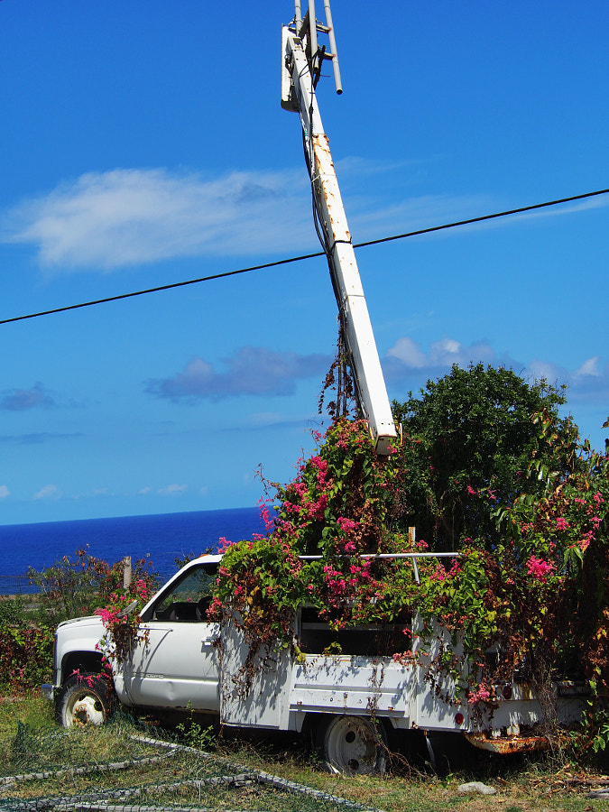 Photograph Flower Truck with a  View (Nevis) by Nancy Lundebjerg on 500px