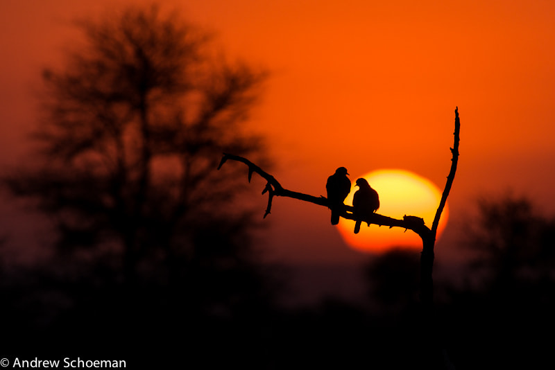 Photograph Love birds by Andrew Schoeman on 500px