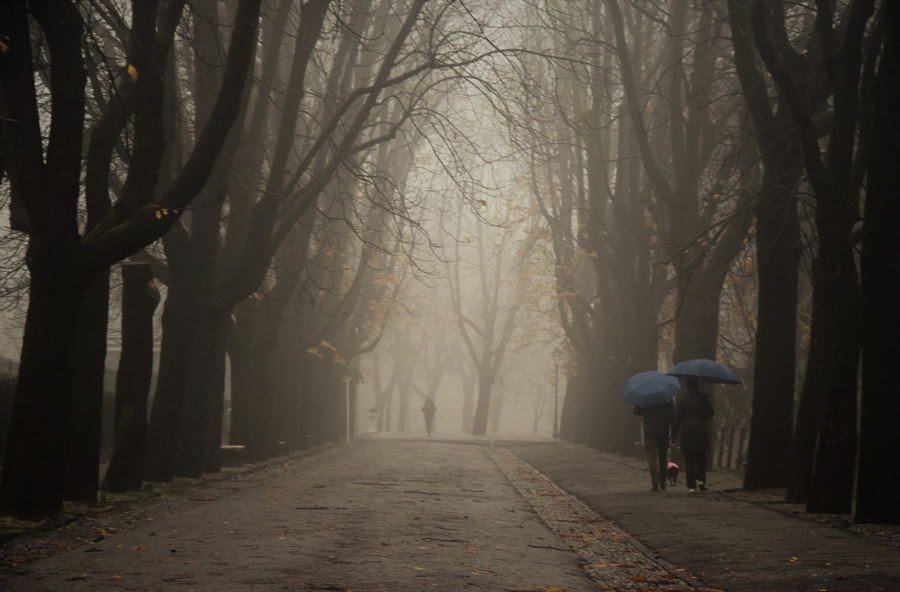 rainy day  by Carlotta  Ricci on 500px.com
