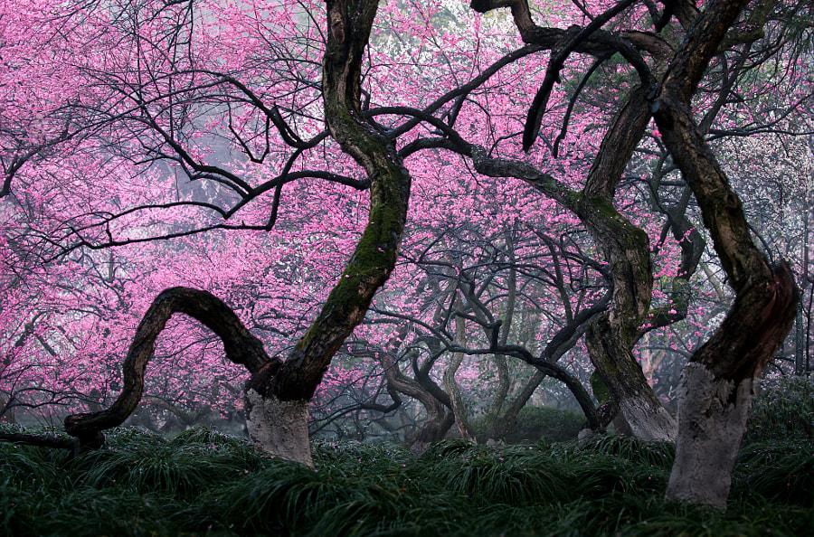 疏影横斜 by 吴晓云Xiaoyun Wu  on 500px.com