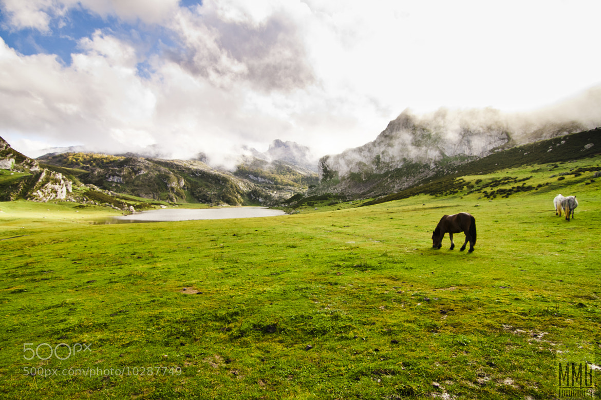 Photograph A blue spot in the green shirt of Asturias by MMB Fotografía Adolfo Gris on 500px