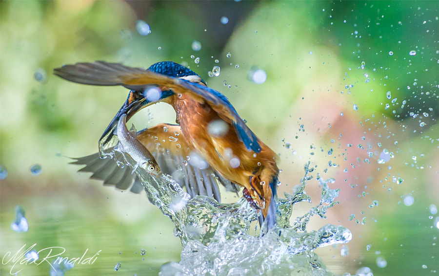 Gotcha! by Max Rinaldi on 500px.com