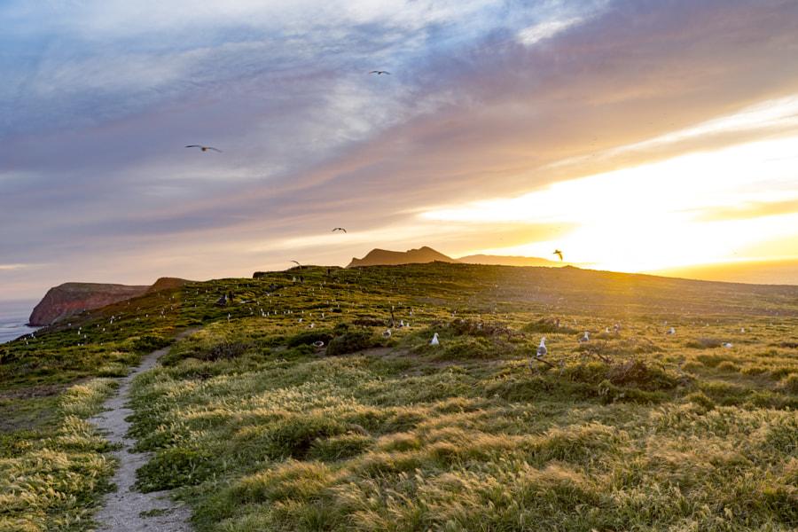 Mặt trời lặn ở đảo Anacapa