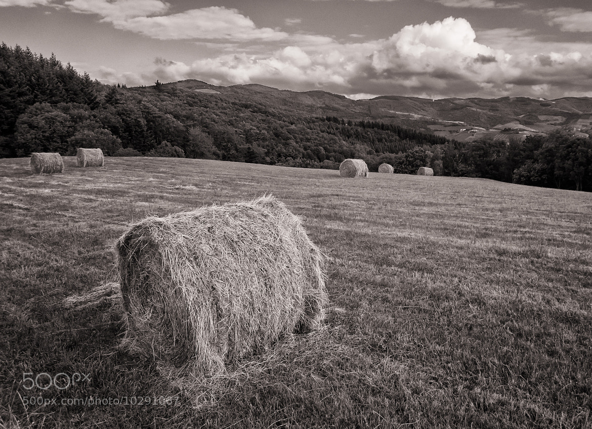 Photograph Haymaking season by Ollie G. on 500px