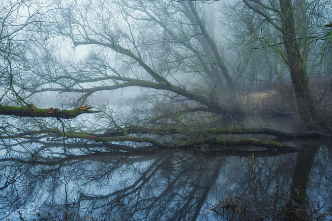 In the swamps II by Martin Podt