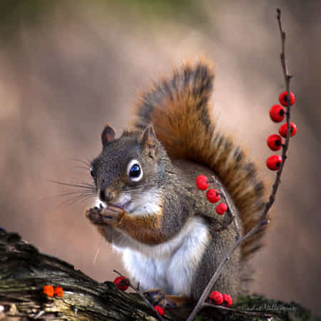 And the winter is coming.. by Andre Villeneuve