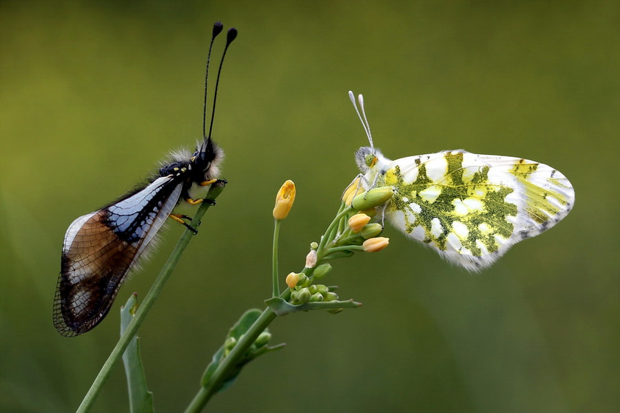 Photograph Head to Head by ertan ertem on 500px