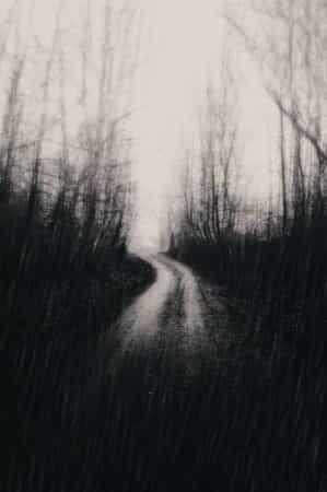 Deep sensation of forest by Karim Bouchareb