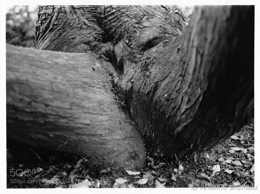 Erotic Wood