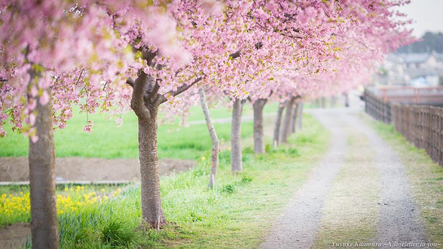 Spring path by Yusuke Kitamura on 500px.com