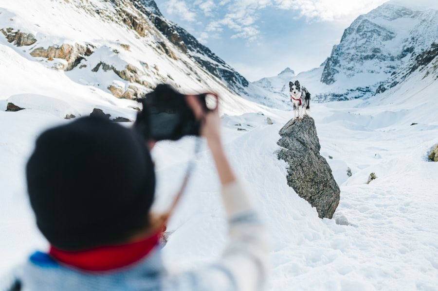 Photographing dog in the mountains by Grzegorz Bukalski on 500px.com
