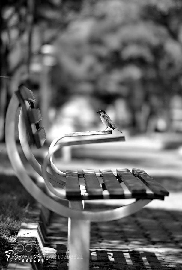 Bird sitting on park bench